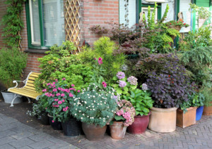 http://www.dreamstime.com/royalty-free-stock-images-potted-plants-collection-image26207629