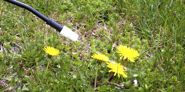 http://www.dreamstime.com/royalty-free-stock-image-spraying-dandelions-image24330506