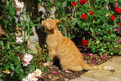 bigstock-Cat-and-flowers-28